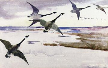 Canadian Geese Artwork by Frank W. Benson