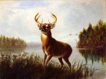 Eight Point Stag Artwork by Arthur Fitzwilliam Tait