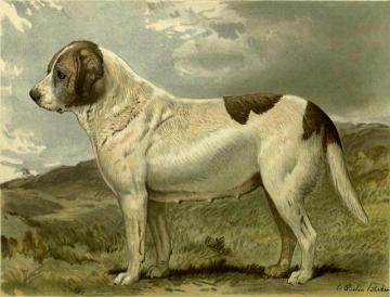 Fred Grahams Smooth St. Bernard Abbess Artwork by Charles Burton Barber