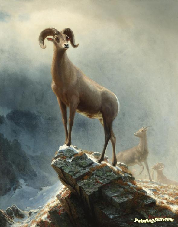 Rocky Mountain Sheep Artwork by Albert Bierstadt