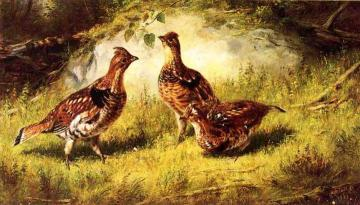 Ruffed Grouse Artwork by Arthur Fitzwilliam Tait