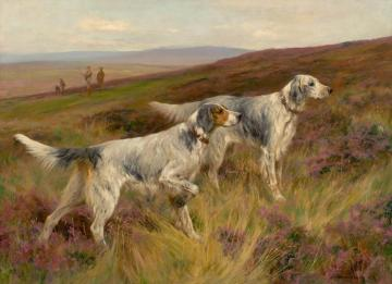 Two English Setters On A Grouse Moor, 1903 Artwork by Arthur Wardle