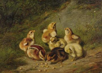 Baby Chicks Artwork by Arthur Fitzwilliam Tait